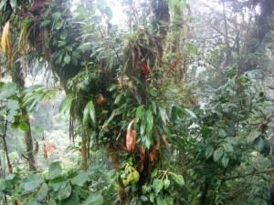 epiphytes-rainforests