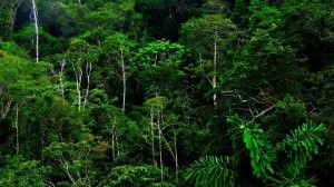 Equatorial Rainforest Climate