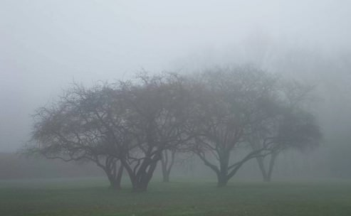 Fog - forms of condensation