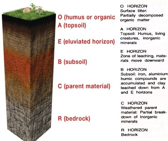 Soil horizons gallery for 4 parts of soil