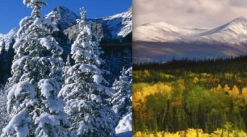 Taiga Boreal Climate - vegetation-summer winter