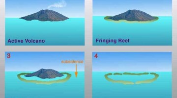 formation of Coral Reef-formation of lakshadweep island