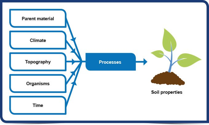 Factors that influence soil formation in indian conditions for Soil formation