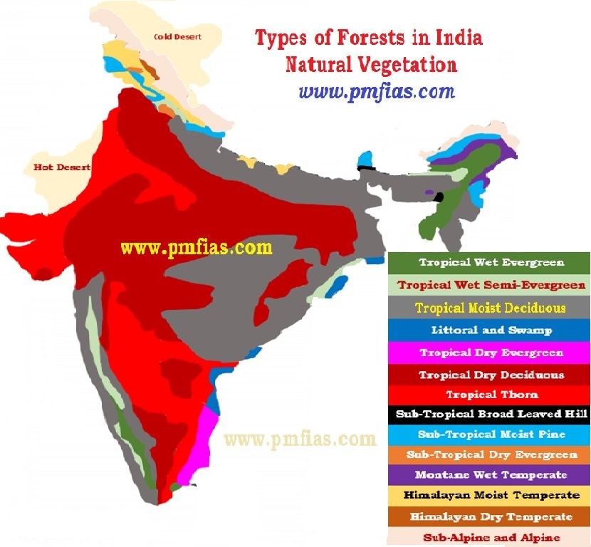 types of forests in india- natural vegetation of india - Copy