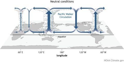 Cellule Walker sur la ceinture tropicale