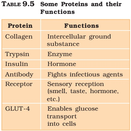 Proteins and their functions