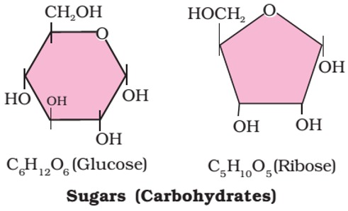 glucose -C6H12O6- carbohydrates