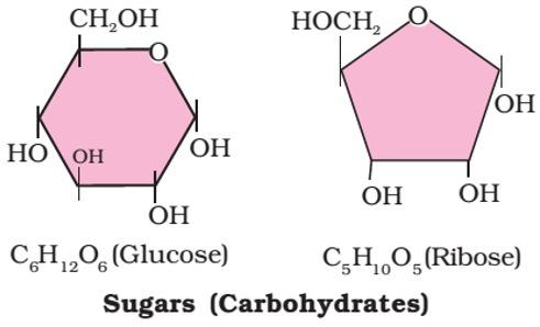 glucose -C6H12O6- carbohydrates