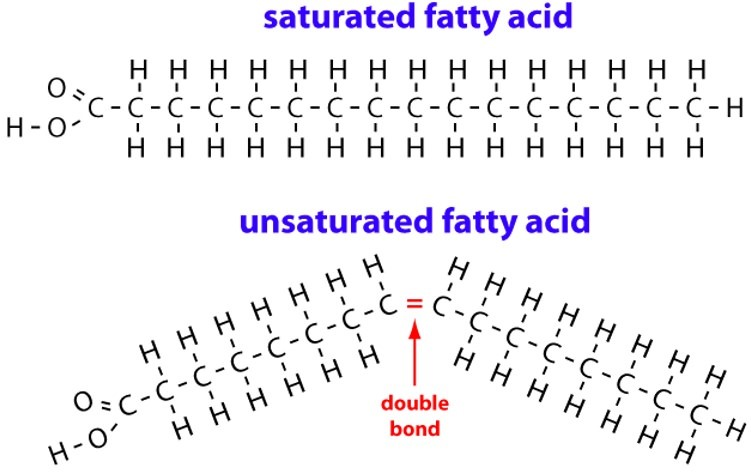 saturated-unsaturated fatty acids - fats