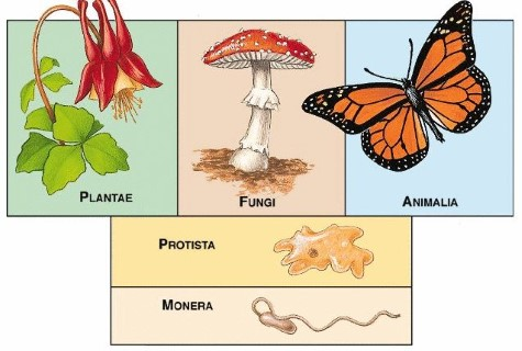 5 Kingdom Classification Plants - Animals