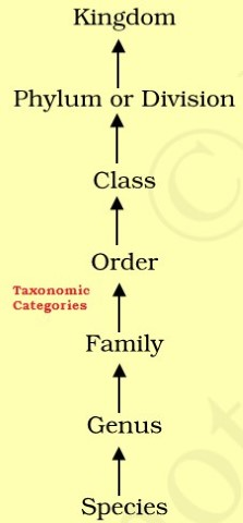 Biological classification - Taxonomic Categories