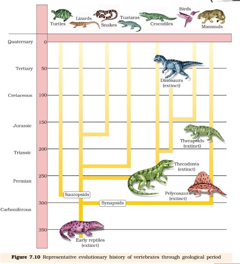 Evolution - Reptiles