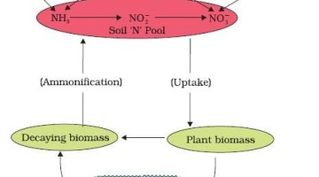 Nitrogen Cycle - Atmosphere - Biomass - Soil
