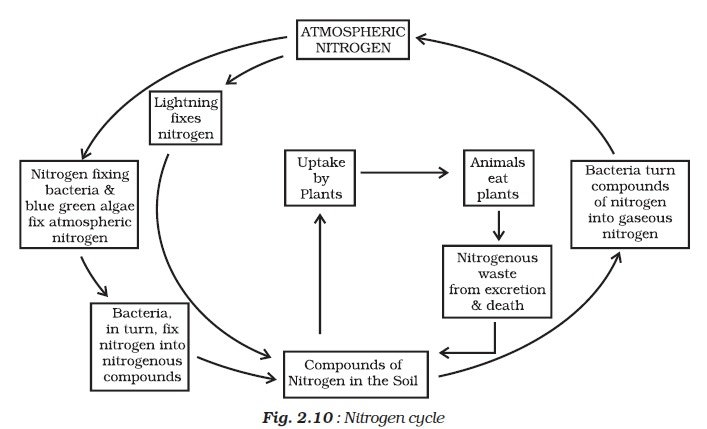 Plant Nutrition Photosynthesis Nitrogen Cycle Fixation