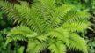 Plant Kingdom – Thallophytes (Algae) – Bryophytes – Pteridophytes