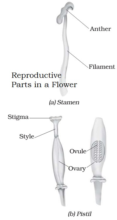 Difference between asexual and sexual reproduction offspring lyrics