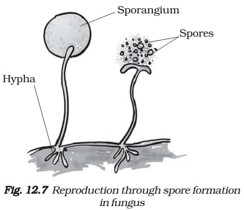 Unisexual reproduction definition science