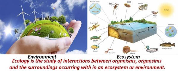 Difference Between Ecology, Environment & Ecosystem