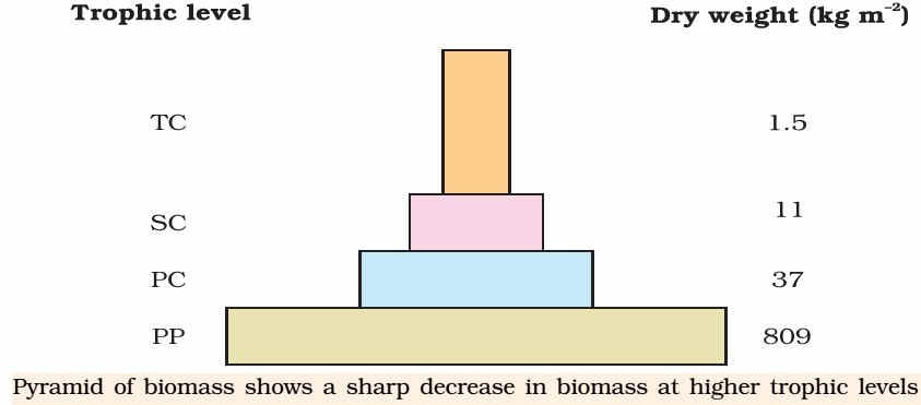 Ecological Pyramid of Biomass