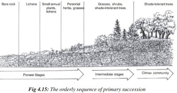 Ecological Succession Primary Secondary Succession Homeostasis