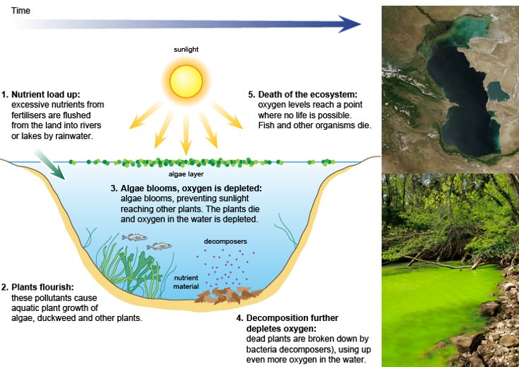 Eutrophication – Algal Bloom