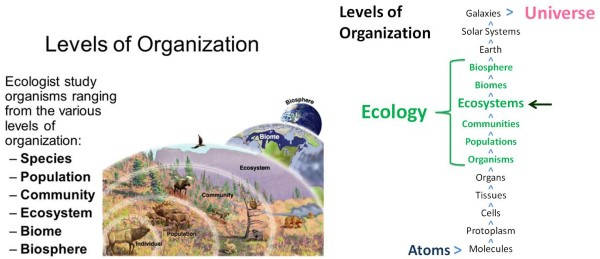 Levels Of Organizations In Ecology