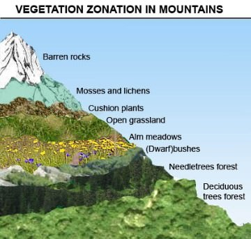 Vertical zonation of vegetation Himalayas
