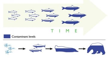 Bioaccumulation & Biomagnification