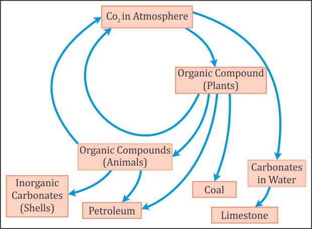 Carbon Cycle (Gaseous Cycle)
