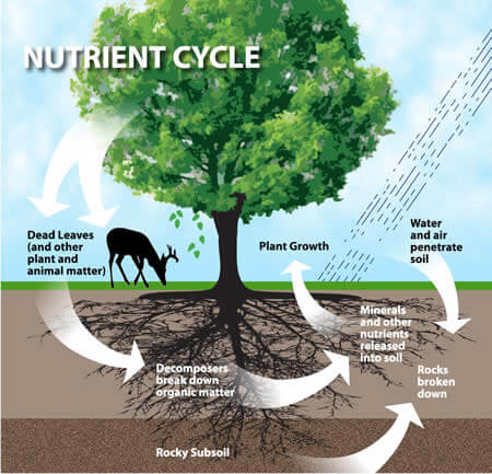 Chemical Cycling or Nutrient Cycling