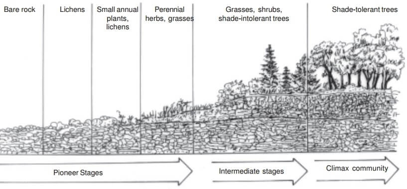 ecological succession project pdf