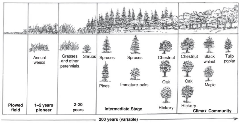 Ecological Succession - Secondary Succession