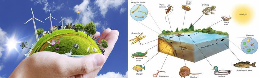 Environment and Aquatic Ecosystem