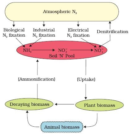 Nitrogen Cycle (Gaseous Cycle)