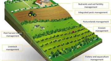 sustainable agriculture - organic farming - biofertilizers