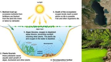 Water Pollution Eutrophication and Algal Bloom