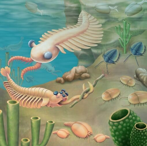 Lifeforms during the Cambrian Period