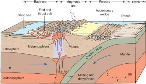 Continent-Ocean Convergence, Formation of Fold Mountains ...